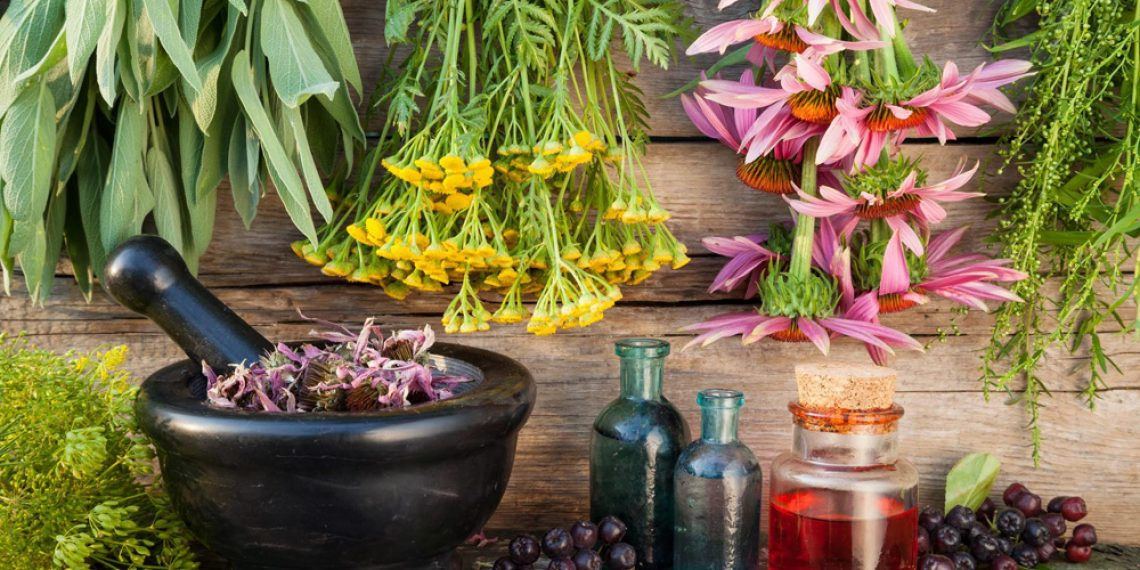 The power hidden in plants. Vitamins, antioxidants, and nutrients for your body